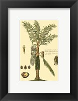 Framed Printed Exotic Palm VI