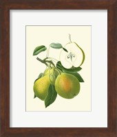 Framed Antique Green Pear