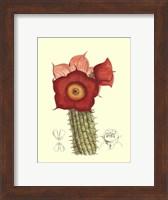 Framed Flowering Cactus II