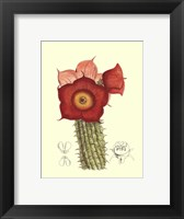 Framed Flowering Cactus II