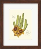 Framed Flowering Cactus III