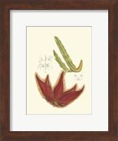 Framed Flowering Cactus IV