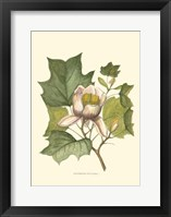 Framed Tulip Tree