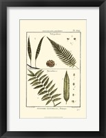 Framed Fern Classification I