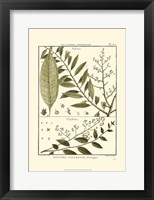 Framed Fern Classification III
