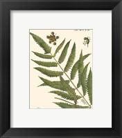 Framed Small Antique Fern II