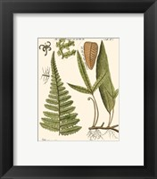 Framed Small Antique Fern IV
