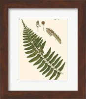 Framed Small Antique Fern V