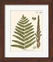 Framed Small Antique Fern VI
