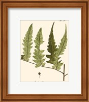 Framed Small Antique Fern VII