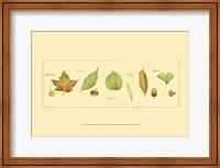 Framed Leaves & Seeds II