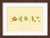 Framed Leaves & Seeds II