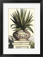 Framed Antique Munting Aloe I