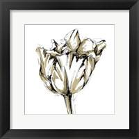 Framed Small Tulip Sketch I