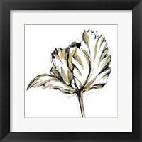 Framed Small Tulip Sketch III