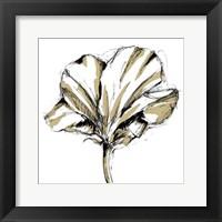 Framed Small Tulip Sketch IV