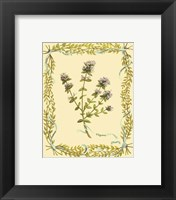 Framed Small Thyme