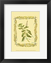 Framed Small Sage