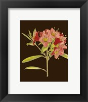 Framed Crimson Blooms IV