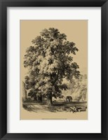 Framed Elm Tree