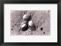 Framed Sand Treasures V