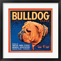 Framed Bull Dog