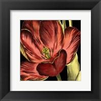 Framed Mini Transitional Tulip III