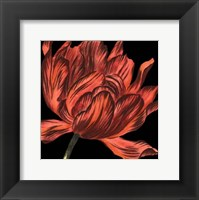 Framed Mini Transitional Tulip IV