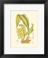 Framed Orchid Plenty I