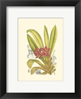 Framed Orchid Plenty II
