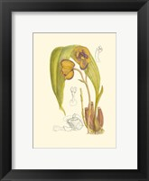 Framed Orchid Plenty VI