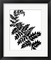 Framed Leaf Silhouette III