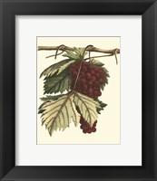 Vintner's Varieties II Framed Print
