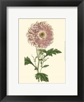 Framed Blushing Blossoms II