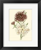 Framed Blushing Blossoms IV
