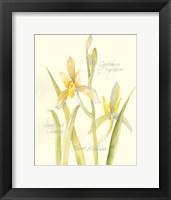 Framed Elissa's Garden IV