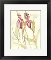 Framed Elissa's Garden VIII