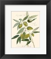 Ascolane Olives Framed Print