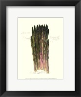 Framed Asparagus Officinalis
