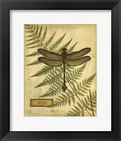 Framed Royal Dragonflies III