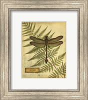 Framed Royal Dragonflies III