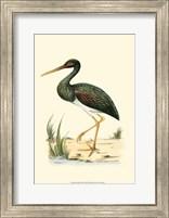 Framed Water Birds I