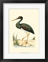 Framed Water Birds I