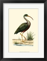 Framed Water Birds II