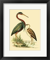 Framed Water Birds III