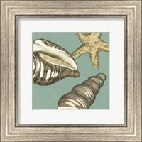 Framed Small Shell Trio on Blue I (P)