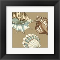 Framed Small Shell Trio on Khaki III (P)