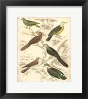Framed Small Avian Habitat II (P)