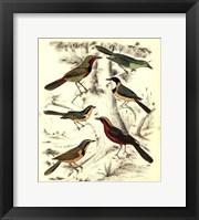 Framed Small Avian Habitat III (P)