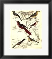 Framed Small Avian Habitat IV (P)